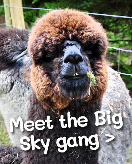 Meet the Big Sky Gang >